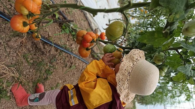 Scufita din Homita farm