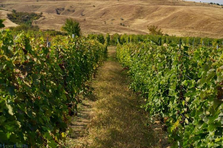 Rotenberg winery
