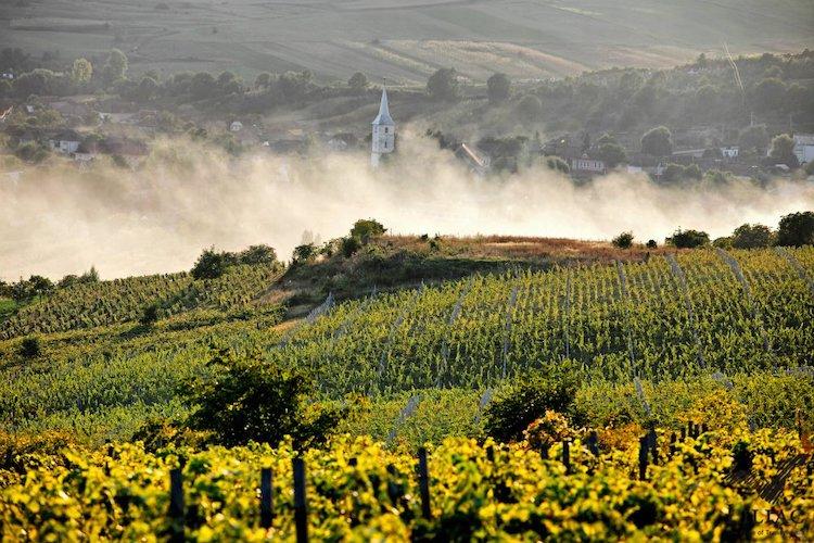 Liliac Winery